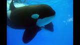 Photos: Dine With Shamu at SeaWorld Orlando - (3/15)