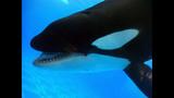 Photos: Dine With Shamu at SeaWorld Orlando - (13/15)