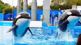 Photos: Dine With Shamu at SeaWorld Orlando - (15/15)