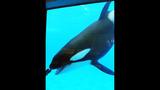 Photos: Dine With Shamu at SeaWorld Orlando - (1/15)