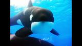 Photos: Dine With Shamu at SeaWorld Orlando - (5/15)
