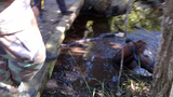 Horse rescued from neck-deep muddy creek - (1/4)