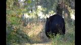 Photos: Black bear spotted in Seminole neighborhood - (5/9)