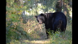 Photos: Black bear spotted in Seminole neighborhood - (1/9)
