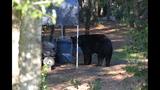 Photos: Black bear spotted in Seminole neighborhood - (4/9)