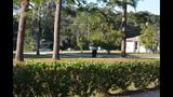 Photos: Black bear spotted in Seminole neighborhood - (6/9)