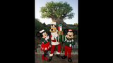 Holidays at Walt Disney World - (8/13)