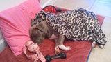Photos: Family's dog injured during Longwood burglary - (4/5)