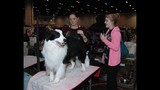 Celebrate Dogs! presented by Eukanuba and AKC - (22/25)
