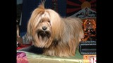 Celebrate Dogs! presented by Eukanuba and AKC - (21/25)