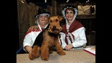 Celebrate Dogs! presented by Eukanuba and AKC - (4/25)