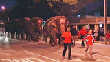 Photos: Ringling Bros. & Barnum & Baily… - (4/6)