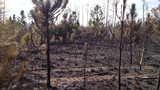 Ormond Beach brush fire - (17/17)