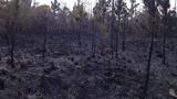 Ormond Beach brush fire - (4/17)