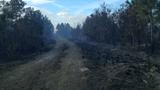 Ormond Beach brush fire - (13/17)