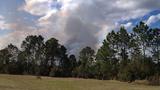 Ormond Beach brush fire - (11/17)