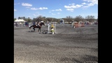 Photos: Ocala Horse Show - (2/5)