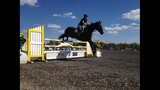 Photos: Ocala Horse Show - (4/5)