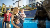 Photos: Sheryl Crow and family visit SeaWorld - (3/5)