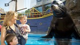 Photos: Sheryl Crow and family visit SeaWorld - (1/5)