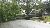 Photos: Storm causes damage to central Fla. - (4/25)