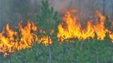 Photos: Fire burning 350-acres in Volusia - (1/10)