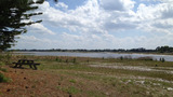 Photos: Deltona lake drying up - (2/4)