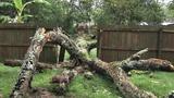 Photos: Tree falls on Apopka home - (1/10)