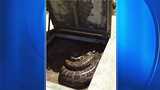 Photos: Python found at water treatment plant - (5/5)