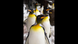 PHOTOS: SeaWorld's Antarctica: Empire of the Penguin - (9/15)