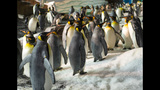 PHOTOS: SeaWorld's Antarctica: Empire of the Penguin - (12/15)