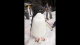 PHOTOS: SeaWorld's Antarctica: Empire of the Penguin - (6/15)