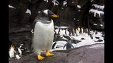PHOTOS: SeaWorld's Antarctica: Empire of the Penguin - (4/15)