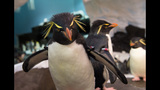 PHOTOS: SeaWorld's Antarctica: Empire of the Penguin - (7/15)