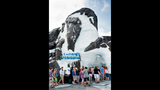 PHOTOS: SeaWorld's Antarctica: Empire of the Penguin - (10/15)
