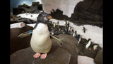 PHOTOS: SeaWorld's Antarctica: Empire of the Penguin - (3/15)