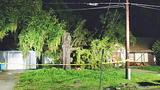 Photos: Tree falls on Longwood homes - (1/7)