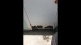 Photos: Altamonte Springs apartment flooded - (2/15)