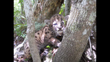 Photos: Baby panther born in the wild - (4/5)