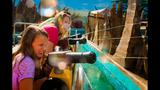 PHOTOS: World of Chima opens at Legoland - (3/13)