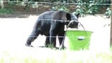 Photos: Bear believed to have killed Volusia… - (2/5)