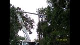 Photos: Downed Trees in Central Florida - (18/21)