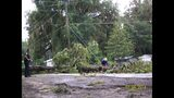 Photos: Downed Trees in Central Florida - (17/21)