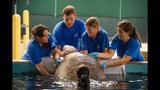 Photos: 'Big Mama' loggerhead sea turtle… - (3/3)