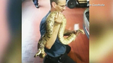 Photos: Pet boa constrictor rescued from car - (4/6)