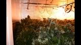 Photos: Apopka marijuana grow house - (5/6)