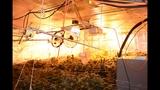 Photos: Apopka marijuana grow house - (3/6)