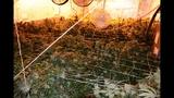 Photos: Apopka marijuana grow house - (2/6)