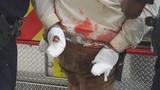 Photos: Man fatally stabs girlfriend - (3/11)