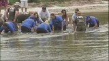Photos: Manatees released after rehab at SeaWorld - (7/7)
